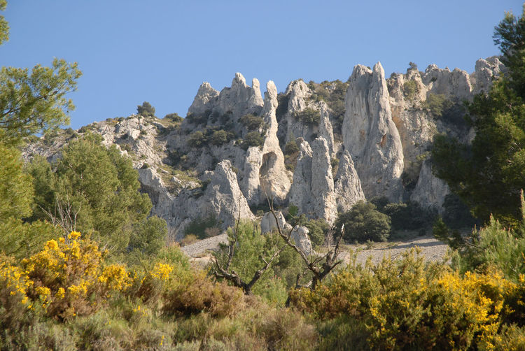Panoramic view of trees and rocks against clear sky