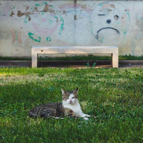 Cat resting on field