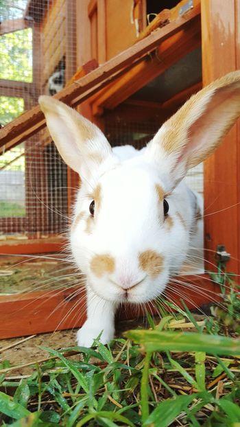 Rabbits 🐇 Bunny 🐰 Rabbit Portrait Rabbit Bunny