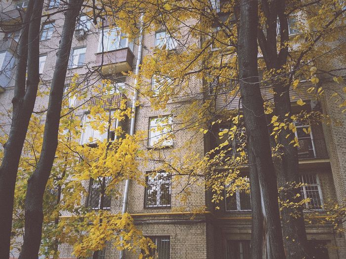 Autumn Autumn Colors Autumn Leaves Autumn🍁🍁🍁 Autumn Collection Moscow Old Buildings Old Building  Tree Trees City Windows