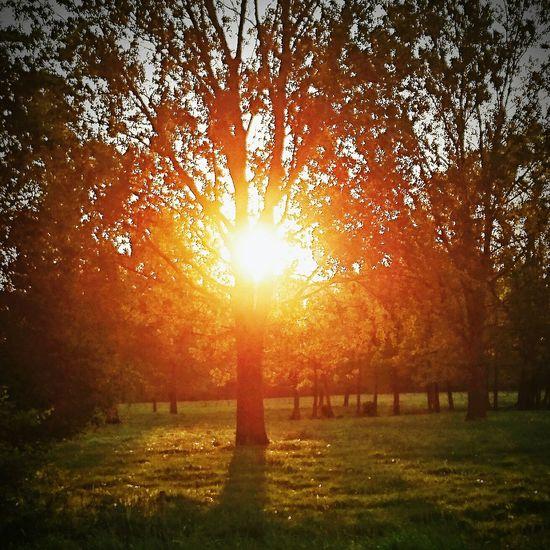 Sundown Tree just tried :-)