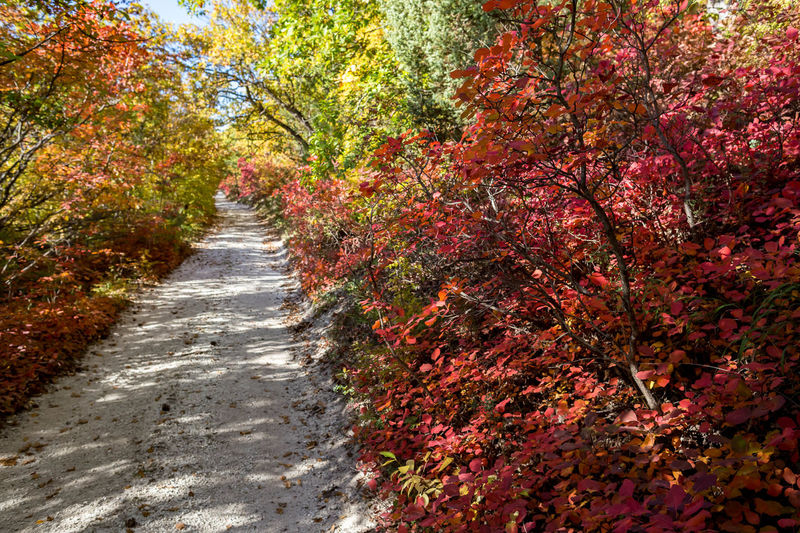 Plant Autumn Tree Beauty In Nature Growth Change The Way Forward Nature No People Direction Day Footpath Outdoors Red Tranquility Leaf Plant Part Park Tranquil Scene Park - Man Made Space