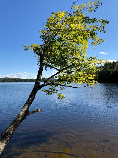 Water Tree Sky Plant Beauty In Nature Tranquility Growth Nature Clear Sky Outdoors Tranquil Scene Sunlight Blue Day Branch Reflection Lake Scenics - Nature No People