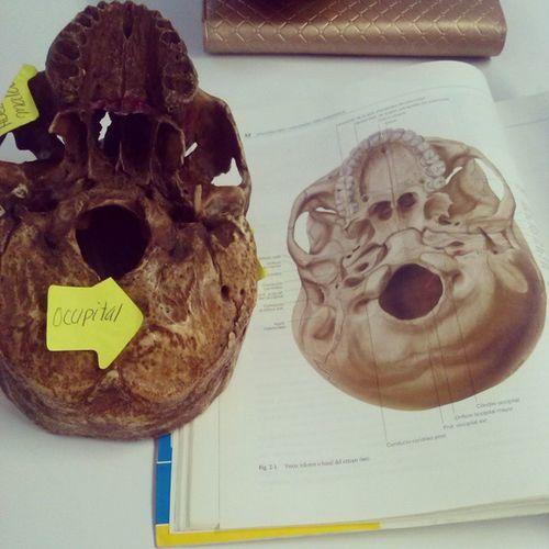 La anatomía con post-it es más fácil :3 VoyAReprobarSiNoMeApendoEso )':
