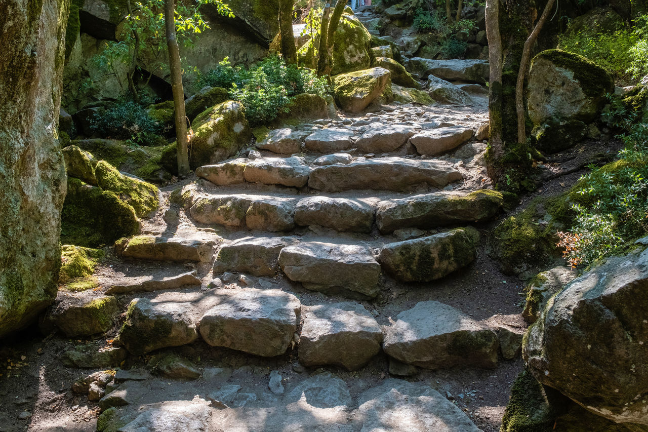 solid, rock, plant, nature, rock - object, tree, no people, day, forest, growth, architecture, stone - object, water, beauty in nature, tranquility, outdoors, staircase, stone, land, flowing water, flowing, stone wall