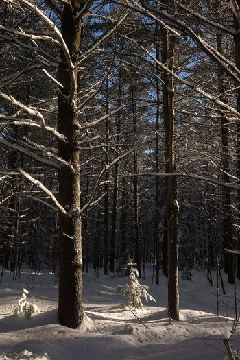 Branch Branches