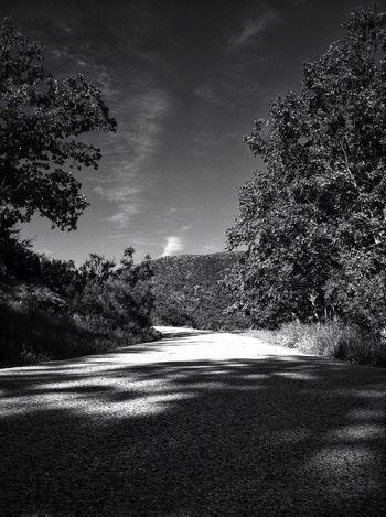 Blackandwhite Landscape Trees EyeEm Best Shots