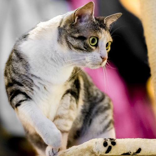 playing Animal Animal Head  Animal Themes Animals Cat Cat Hunting  Cat Lovers Cat Playing Cats Cats Of EyeEm Cat♡ Close-up Color Domestic Animals Domestic Cat Feline Hunting Looking Up Pets Playing Playing With The Animals Portrait Whisker