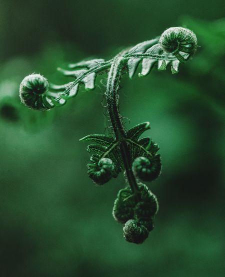 Summer Botany