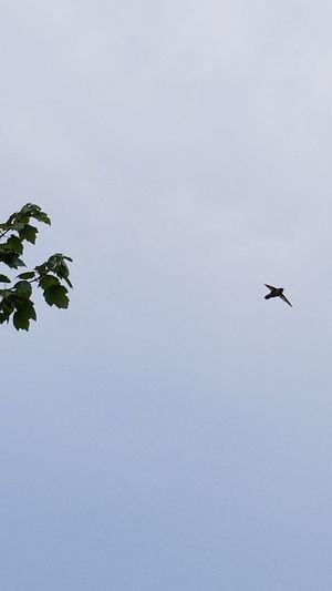 Hummingbird Bird Bird Photography Flying Bird Tree Sky Spread Wings Flight Fly