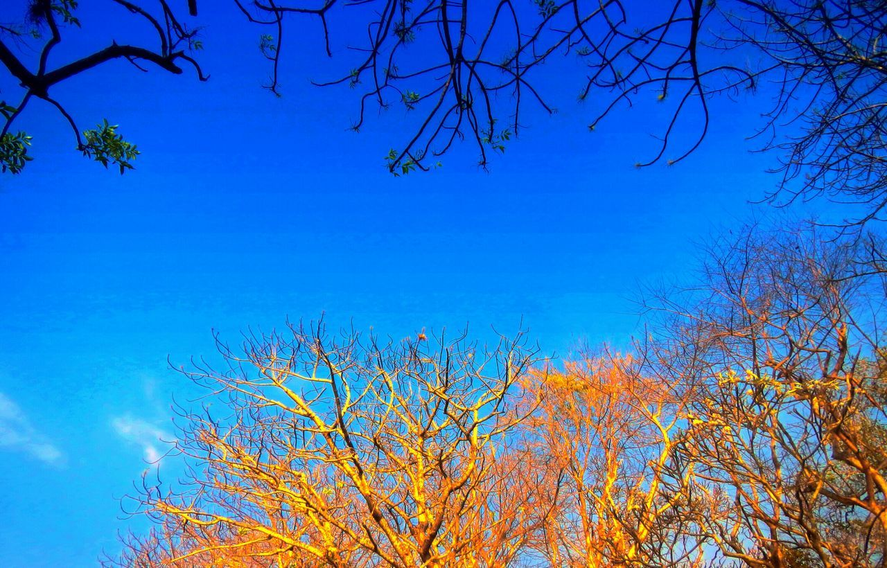 blue, tree, beauty in nature, nature, branch, tranquility, growth, day, outdoors, bare tree, low angle view, no people, sky, tranquil scene, scenics, clear sky