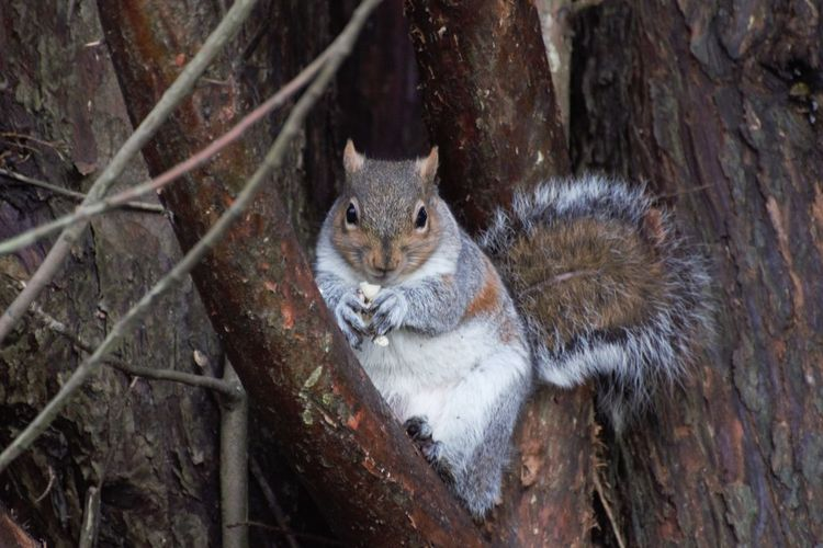 Portrait of squirrel sitting on tree trunk
