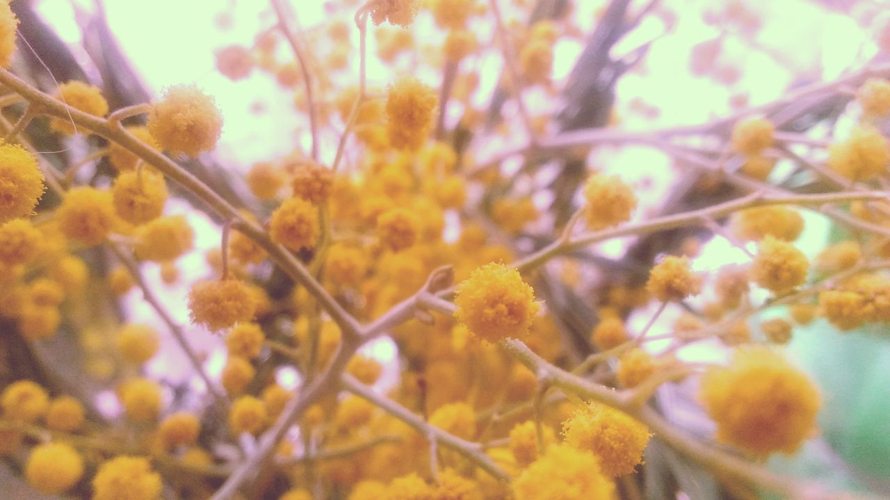 growth, nature, beauty in nature, flower, fragility, close-up, selective focus, no people, plant, outdoors, yellow, springtime, day, freshness, tree, flower head