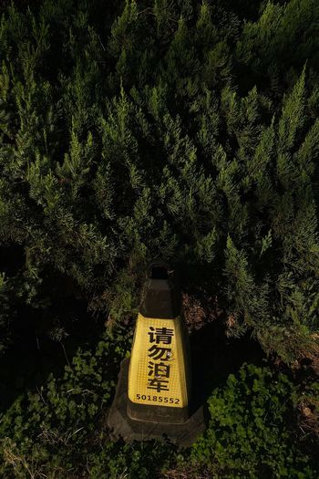 High angle view of information sign on trees in forest