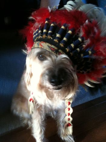 How You Celebrate Holidays Thanksgiving Happy Thanksgiving!! Happy Thanksgiving Indian Indian Headress Pet Cute Pets Hey Pilgrim, when are we having Turkey? My Dog Dog Showcase: November