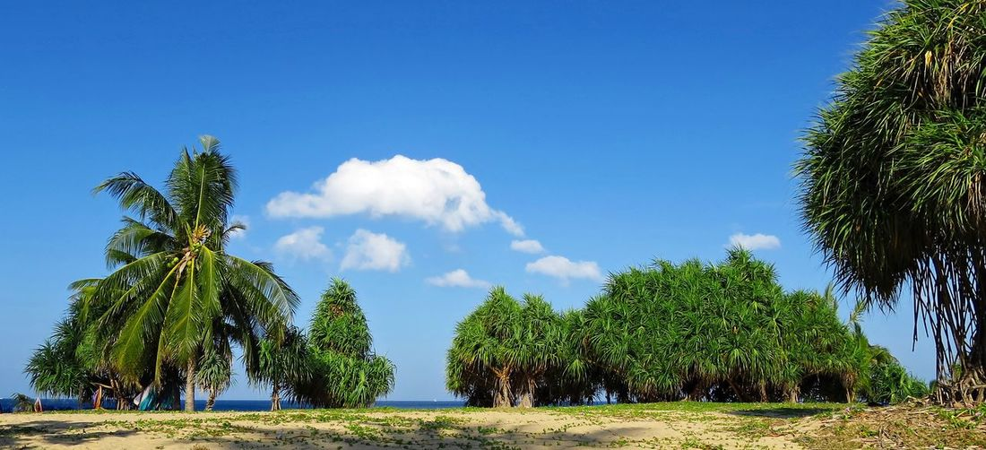 Panoramic View Of Palm Trees On Field Against Blue Sky