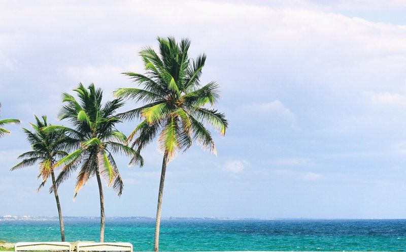 Santo Domingo Dominican Republic Beach Palm Tree Sea Caribbean Caribbean Sea Caribbean Island Palm Tree Palms Sky Nature Water Coconut Trees