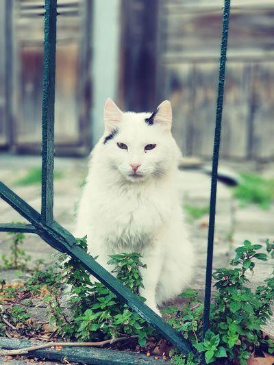 Portrait of white cat sitting on metal