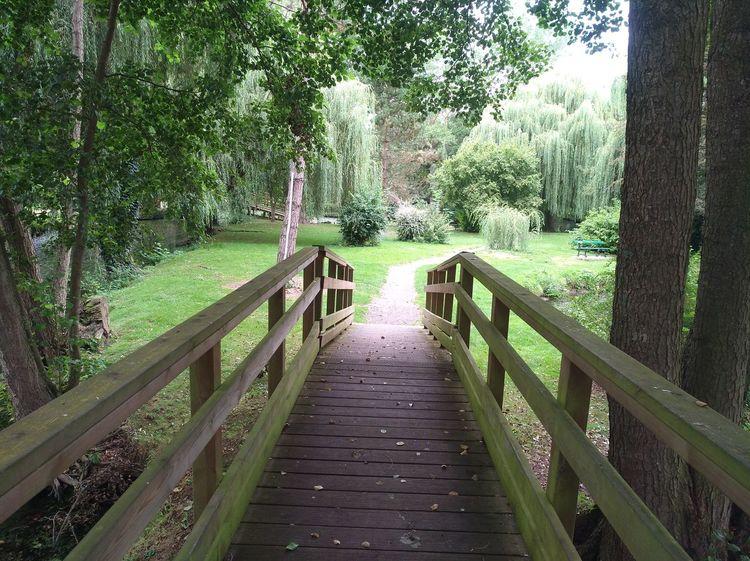 Tree Water Railing Footbridge Sky
