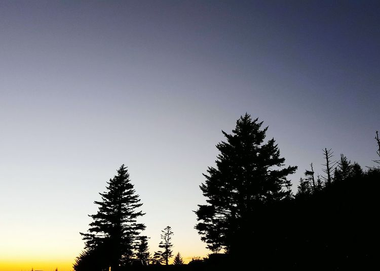 Twilightand Spruce Silhouettes, Clingmans Dome Great Smoky Mountains National Park Tennessee. Evening Sky Trees Evergreen Trees Nature Hiking
