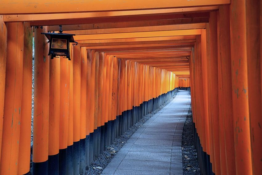 Fushimi Inari-taisha. By SONY A7R Fushimi Inari-taisha Japan Japan Architecture Architecture Building Exterior Built Structure Day In A Row Indoors  No People Orange Color Place Of Worship Religion Shrine Spirituality The Way Forward Tourism Travel Destinations EyeEmNewHere