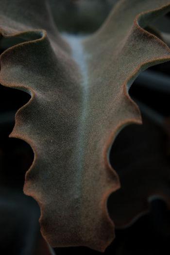 Full frame shot of animal