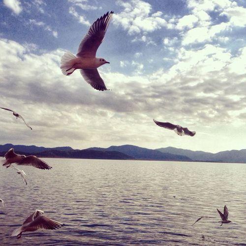 Nature Sea Birds