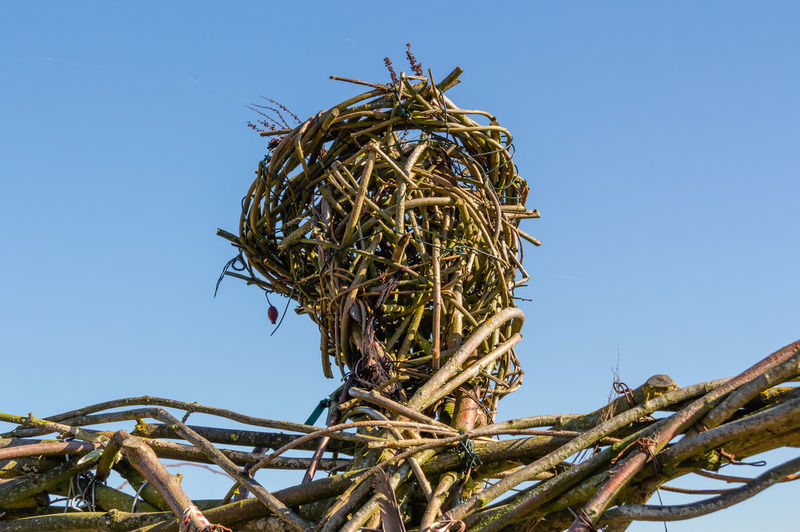 No People Nature Day Twig Tangled Complexity Outdoors Clear Sky Blue Sky Wicker Close Up Headshot Low Angle View