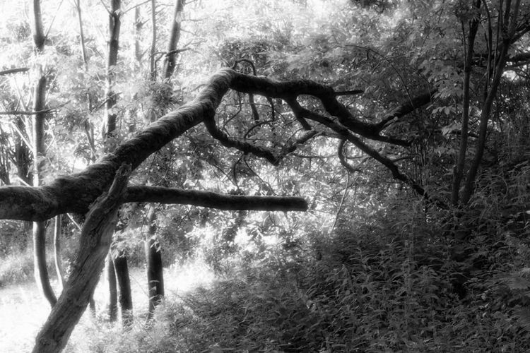 Photoshop Edit Light And Shadow Black & White Tree Branch Limb Branches Showcase July