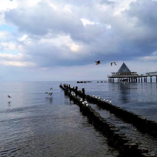Heringsdorf/Insel Usedom Ostsee Baltic Sea Usedom Seebrücke Sea Silhouette Water Tranquility Nature Outdoors Flock Of Birds