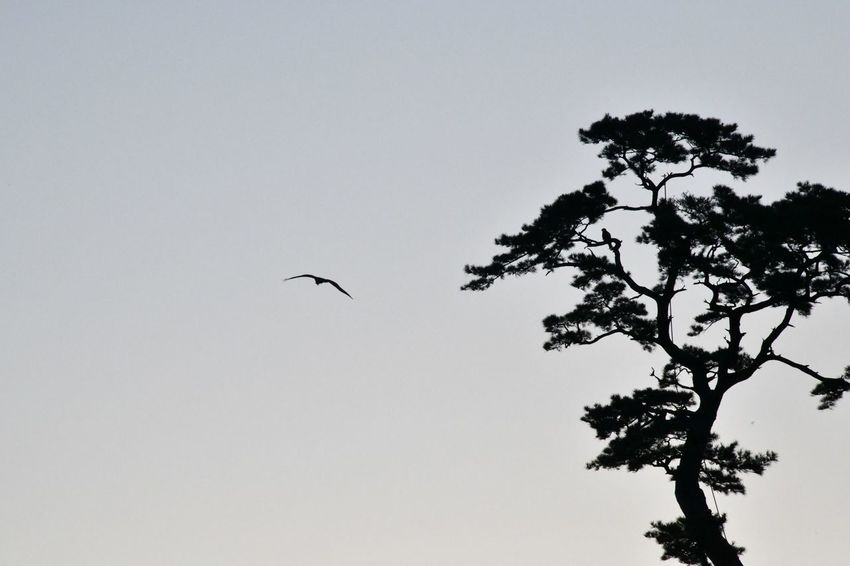 Tree Animal Themes Sky Animal Animals In The Wild Animal Wildlife Bird