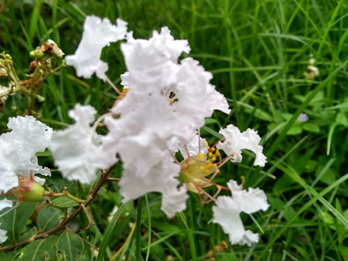Close-up of white flowering plants