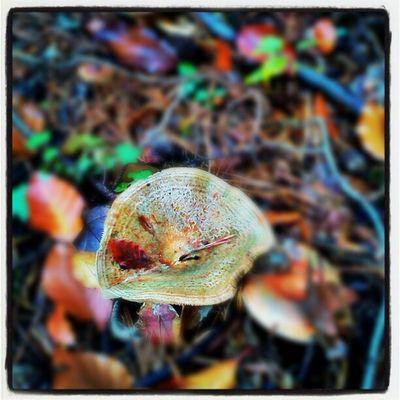 Herbst Pilze Eisenbach Obernburg