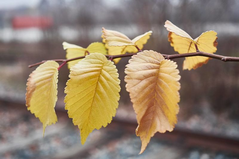Close-up Focus On Foreground Yellow Nature Plant No People Outdoors Day Urban Nature Leaves Leaves And Branches Autumn Autumn Colours Abandoned Places
