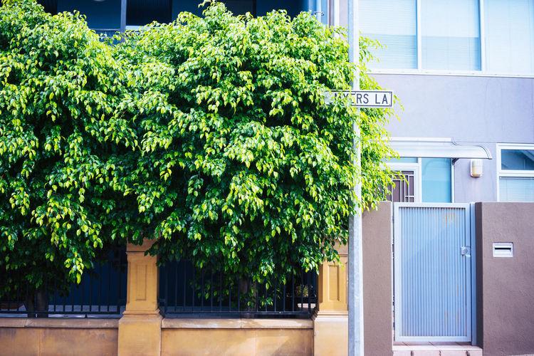 Backdoor Green Leaves Street From The Street Closed Door Ivy Entryway Doorknob Entrance Front Door Creeper Plant Door Handle Closed Whitewashed Arched Open Door Locked Keyhole Door Door Knocker Latch