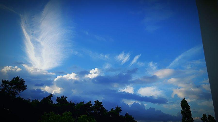 Blue Sky Tree Cloud - Sky Low Angle View Nature Outdoors Wolken Wolkenbilder Wolken Und Himmel Seltene Wolken
