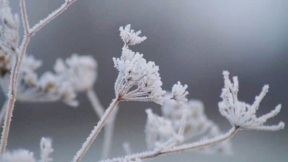 Winter Cold Temperature Frozen Ice Frost Ice Crystal Outdoors It Is Cold Outside How's The Weather Today? Winter Is Coming... The Places I've Been Today First Touch Of Winter December 2016 Autumn 2016 Showcase December Bokeh Frosted Nature
