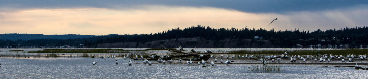 Landscape Mine Nature River Seagulls