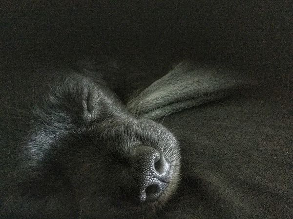Cute Dog  Cute Smile Black Sleeping Dog Sleeping Sleep Puppy JGLowe Full Frame Indoors  No People Textile High Angle View Backgrounds Close-up Textured  Emotion Shape
