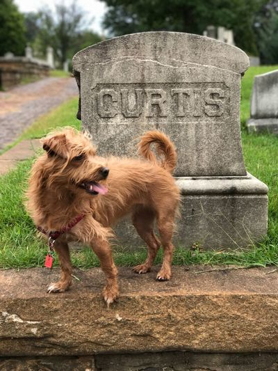 Pet Portraits Perl Cemetery