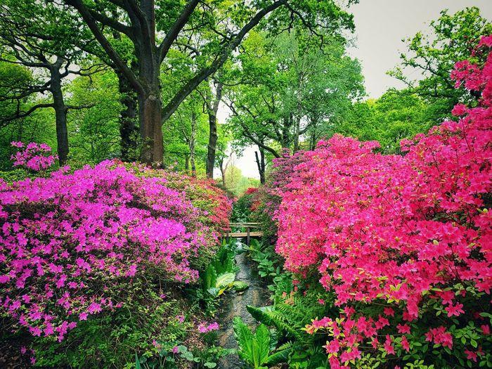 Pink flowering plant in park