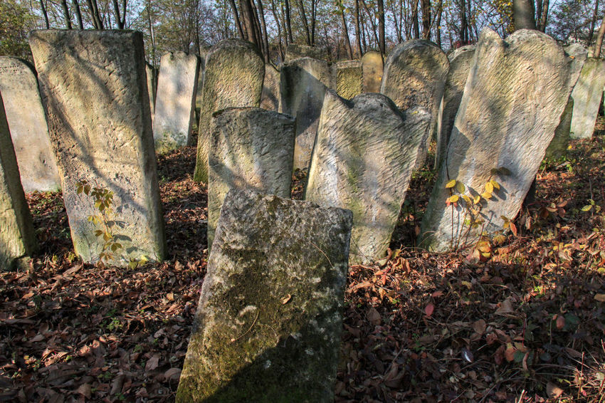 Cemetery Jewish Ucraina 🇺🇦 Close-up Day Forest History Jewish Cemetery Nature No People Outdoors Tombstones Tree Tree Trunk