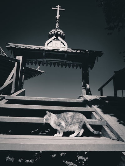 Low angle view of cat on building roof