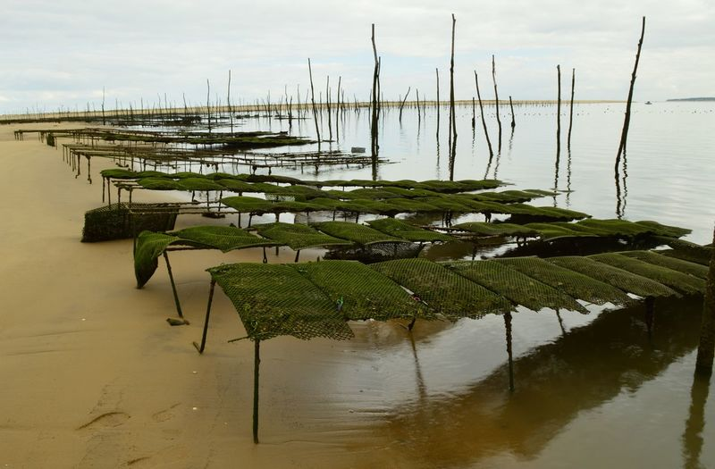 Scenic view of wooden posts in lake against sky