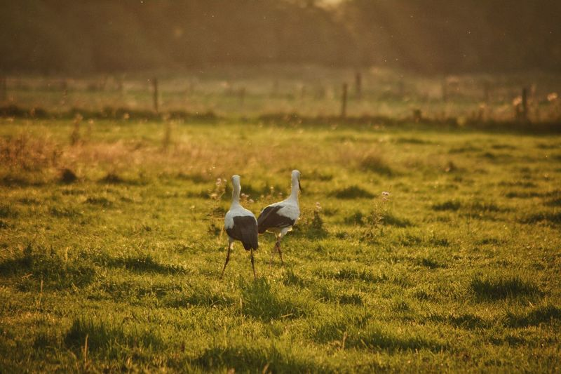 Sonnenuntergang Animal Wildlife Animals In The Wild Grass Animal Themes Nature Bird Outdoors No People Day Beauty In Nature Light And Shadow NRW Life NRW Nature Life The Week On EyeEm The Great Outdoors - 2018 EyeEm Awards