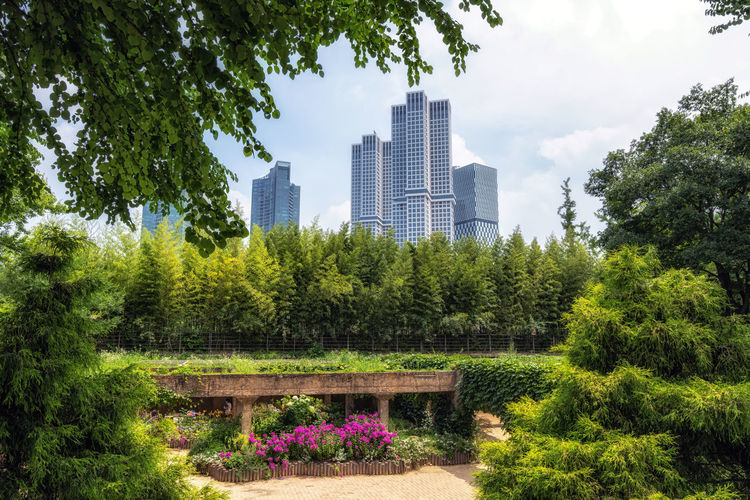 Trees and plants in park against buildings in city