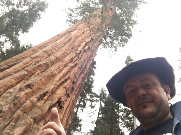 Sequoia park...
