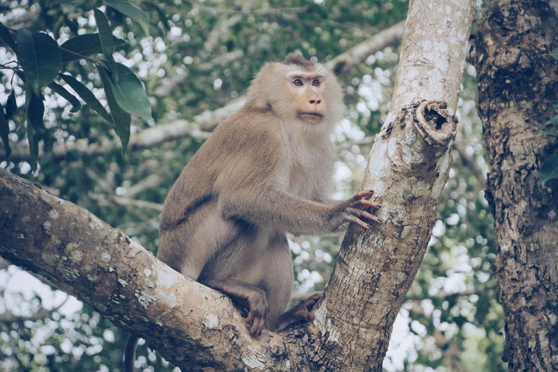 Monkey Khao Yai National Park Thailand Animal Wildlife Animals In The Wild Animal Nakhon Ratchasima Canon 7D