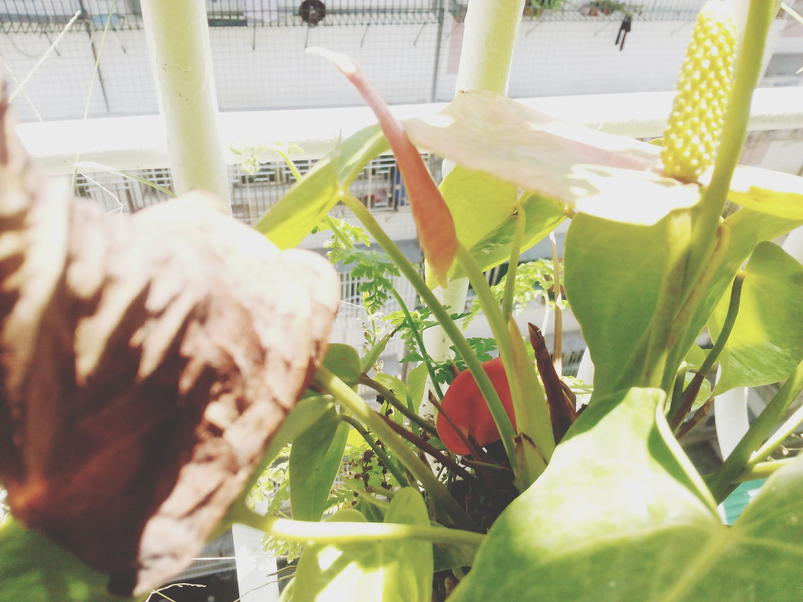 potted plant, leaf, plant, indoors, green color, animal themes, window, glass - material, growth, freshness, close-up, day, sunlight, transparent, one animal, one person, front or back yard, nature, table, focus on foreground