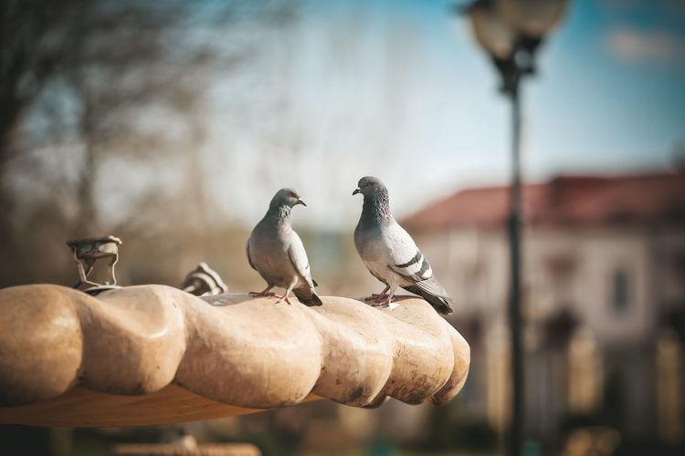 Birds perching on wood against sky